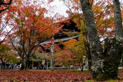 京都紅葉狩り【南禅寺:紅葉】20201123