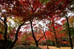 京都紅葉狩り【永観堂:紅葉】③20201123