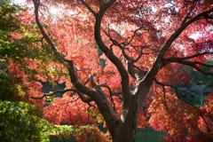 薬師池公園【薬師池周辺の紅葉】③20201115