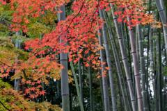 京都紅葉狩り【北野天満宮:紅葉】③20201122