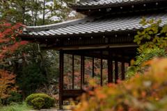 京都紅葉狩り【南禅寺:天授庵】③20201123