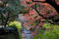京都紅葉狩り【北野天満宮:紅葉】②20201122