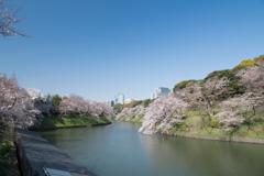 【千鳥ヶ淵緑道の桜】⑦20200326