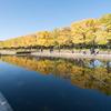 昭和記念公園【カナールのイチョウ】②20171105