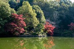 薬師池公園【薬師池周辺の紅葉】②20201115