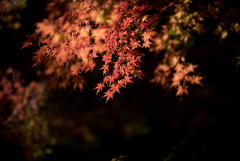 【旧古河庭園の紅葉】⑥20181201