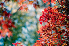 薬師池公園【菖蒲田右側の紅葉】③20201115銀塩NLP