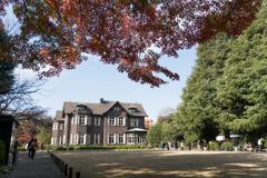 【旧古河庭園の紅葉】①20181201
