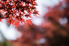 薬師池公園【菖蒲田右側の紅葉】⑥20201115