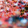 薬師池公園【菖蒲田右側の紅葉】⑧20201115銀塩