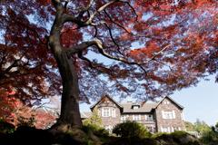 【旧古河庭園の紅葉】②20181201
