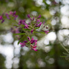 府中市郷土の森【萩の花】④20201003
