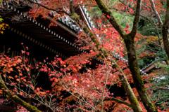 京都紅葉狩り【永観堂:紅葉】④20201123