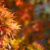 薬師池公園【菖蒲田右側の紅葉】⑤20201115