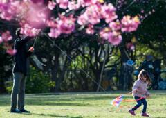 桜の日の父娘/私的スケッチ