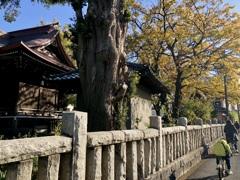 iPhoneスケッチ・13/神社の秋