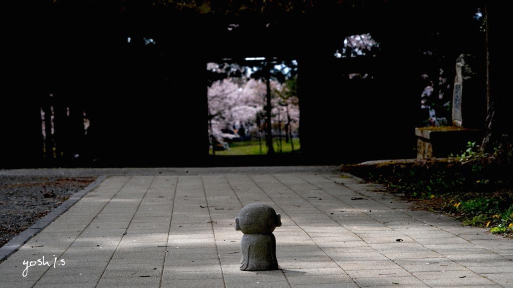 写真句:花見