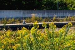 写真エッセイ:黄色い季節