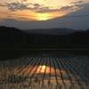 写真句:夕日影