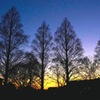 写真エッセイ:メタセコイア の日没