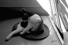 写真指編:ああ、帽子が・・:B&W