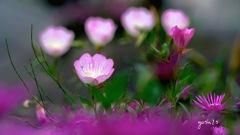 写真句:小さな花たちのコンサート