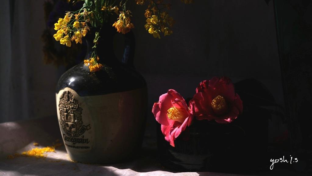 写真句:春の花たち12 :玄関の花