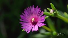 写真句: Shining flower