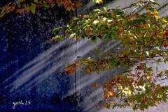 写真エッセイ:公園の光と影1