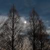写真歌:令和新年の月:NTW224