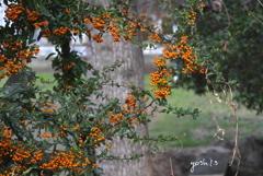 写真句:行く秋を彩る