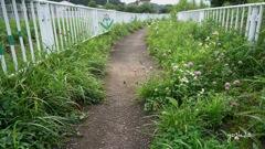 写真エッセイ: 散歩道の草花