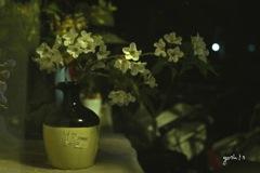 写真句:山桜追憶5