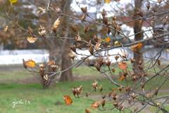写真エッセイ:晩秋の色