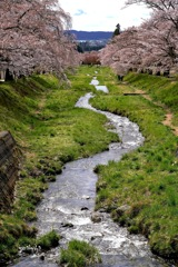 写真歌:観音寺川花堤5