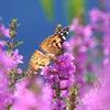 写真句:花の森のてふてふ2
