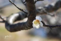 写真句:梅が香1