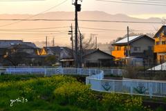 写真歌:菜の花に夕日