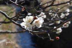 写真句:梅が香2