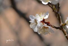 写真句:梅が香4