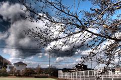 写真句:こぶしと空とテニスコート