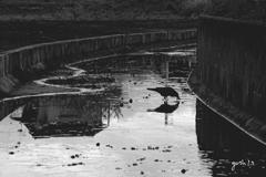 写真指編:水ぬるむ:Black & White
