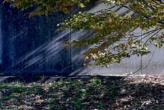 写真エッセイ:公園の光と影2