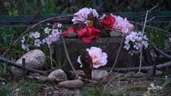 写真エッセイ:花のモニュメント