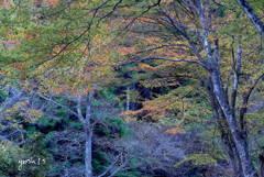 写真エッセイ:花貫渓谷すっ飛び行脚1:紅葉