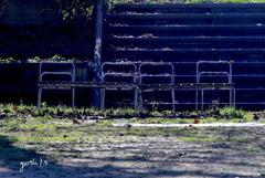 写真三行詩:公園の光と影4
