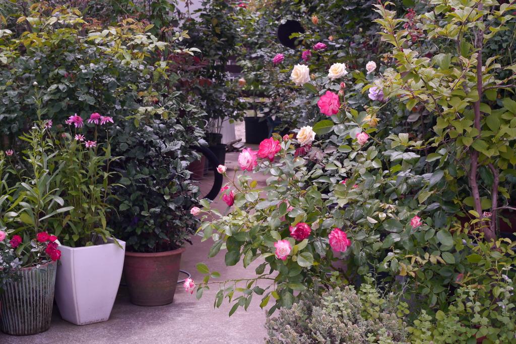玄関先ウォッチング4:花のエントランス