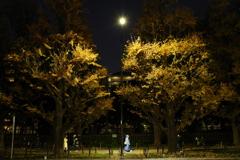 銀杏並木の下で