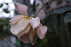 rainyflower