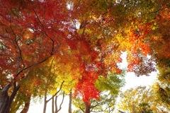 柔らかく、秋